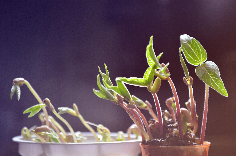 growing plants blog